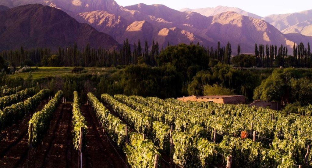 Cafayate - Cafayate Vineyards - House of Jasmines (HA Web)