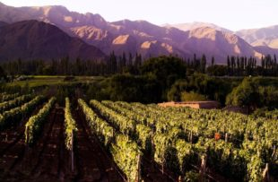 Cafayate - Cafayate Vineyards - House of Jasmines (HA Web)