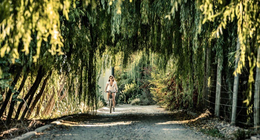 Cycling - Biking in Vines - Cavas (HA Web)
