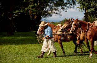 Gaucho & Horses (HA Web)