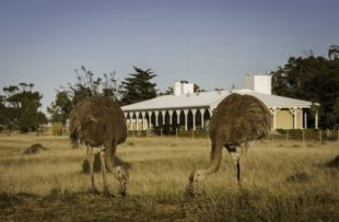 Lodge Exterior & Rheas - Attipica (HA Web)