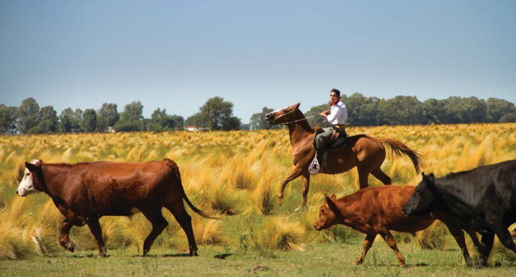 Pampas Estancia - Cattle Ranching Pampas - Tourist Board (HA Web)