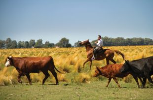 Pampas Estancia - Cattle Ranching Pampas - Tourist Board (HA Web)