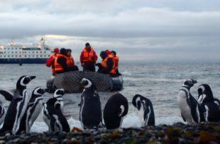 Penguins, Ship, Zodiac - Australis (HA Web)