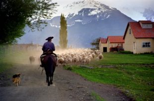Ranch Day - Sheep herding Luis Franke - Attipica (HA Web) (2)