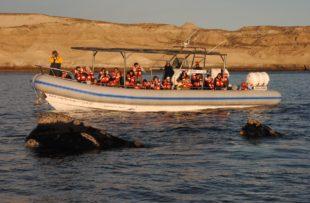 Valdes & Whales - Attipica (Dhruv)