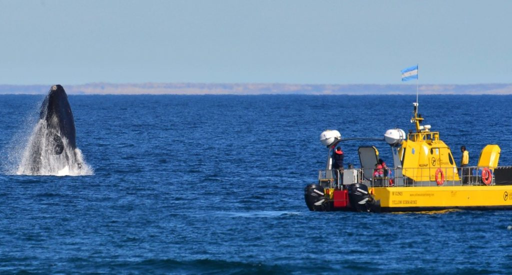 Yellow Submarine - Whale & Boat - Attipica (HA Web)